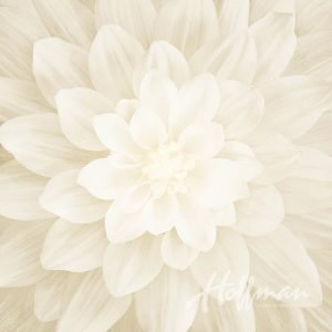P4389-22 Ivory - Dream Big - Hoffman Spectrum Digital Print Panel