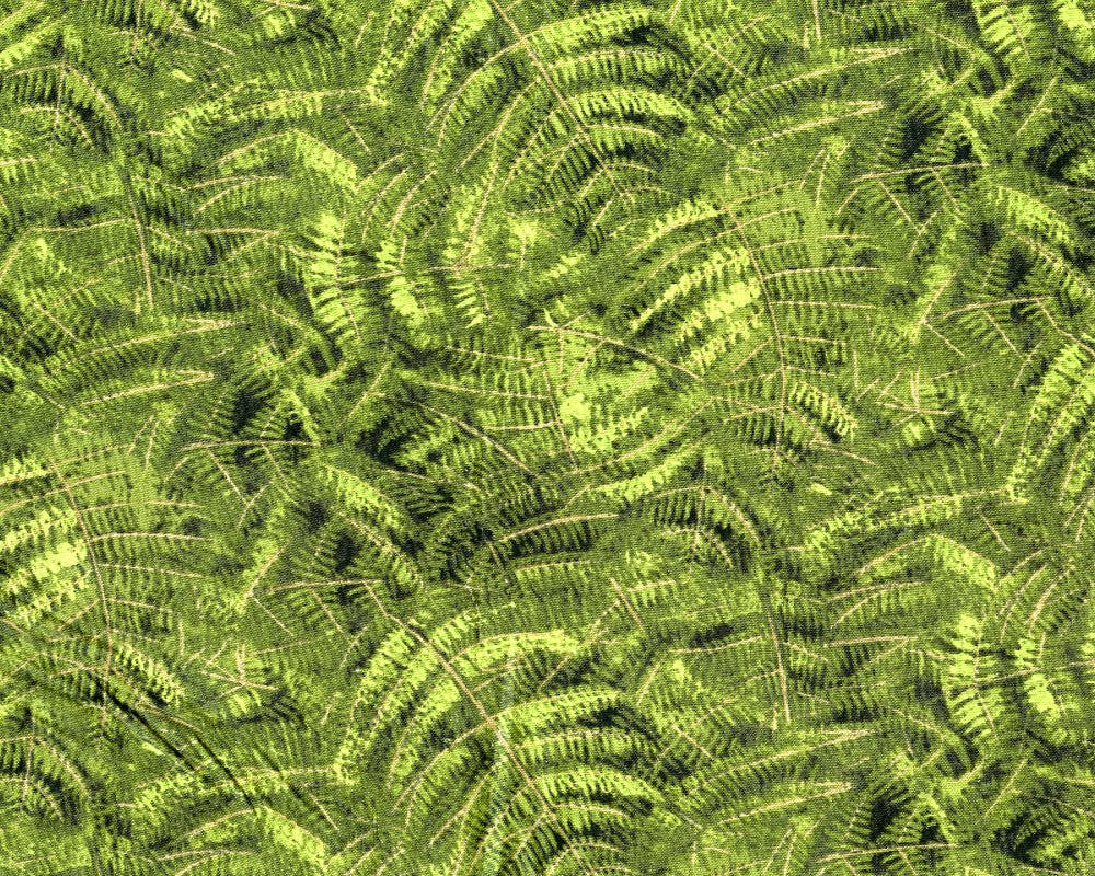 Naturescapes Green Ferns