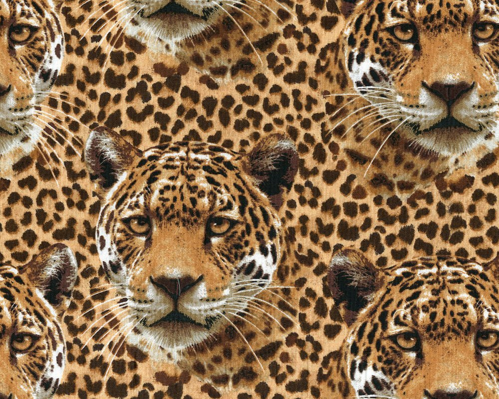 On the Wild Side Leopards