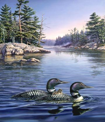 Naturescapes Loon Lake DP21935-44 Loon Panel