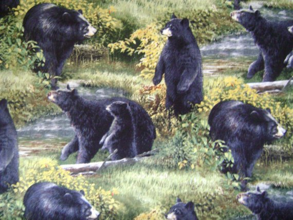 Basic Black Bear Scenic