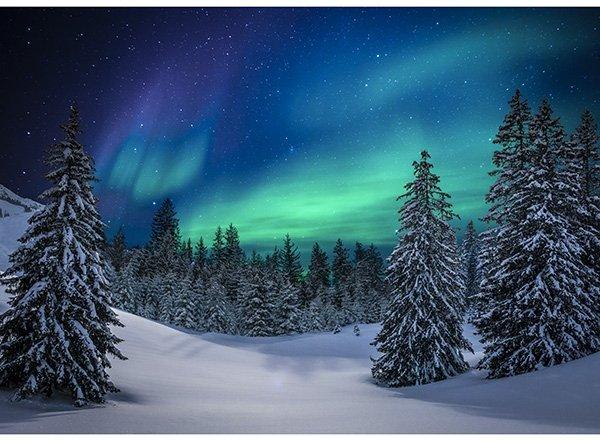 Call Of The Wild - Aurora