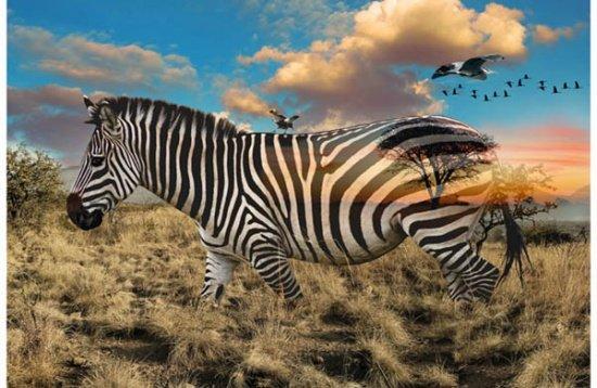 Zebra Call of the Wild Digital Panel