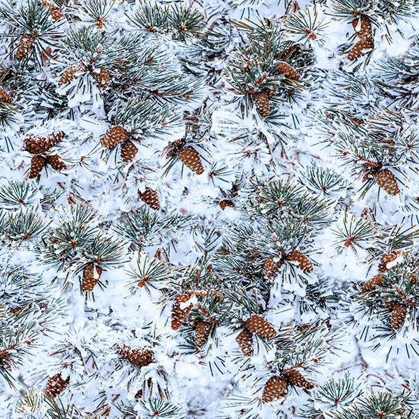 Winter's Wings 4867-141