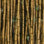 Bamboo Call of the Wild