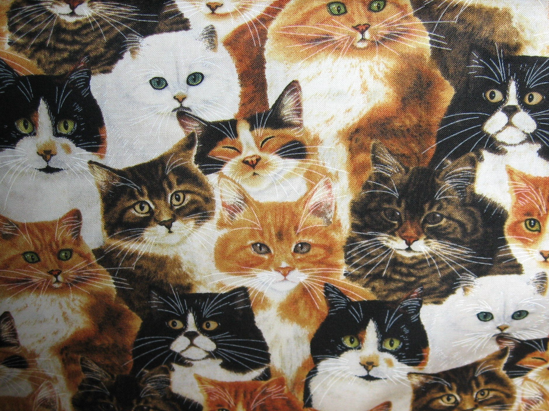 Feline Cats