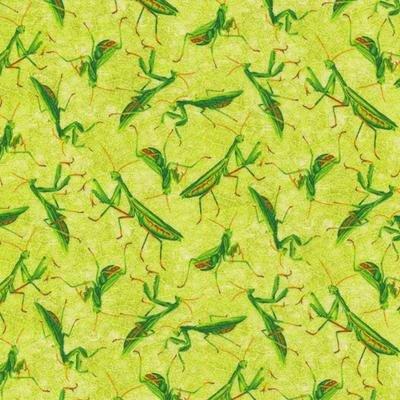 Frolicking Field  Praying Mantise - Paintbrish Studio