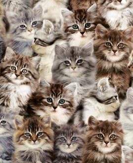 one of a kind - cats