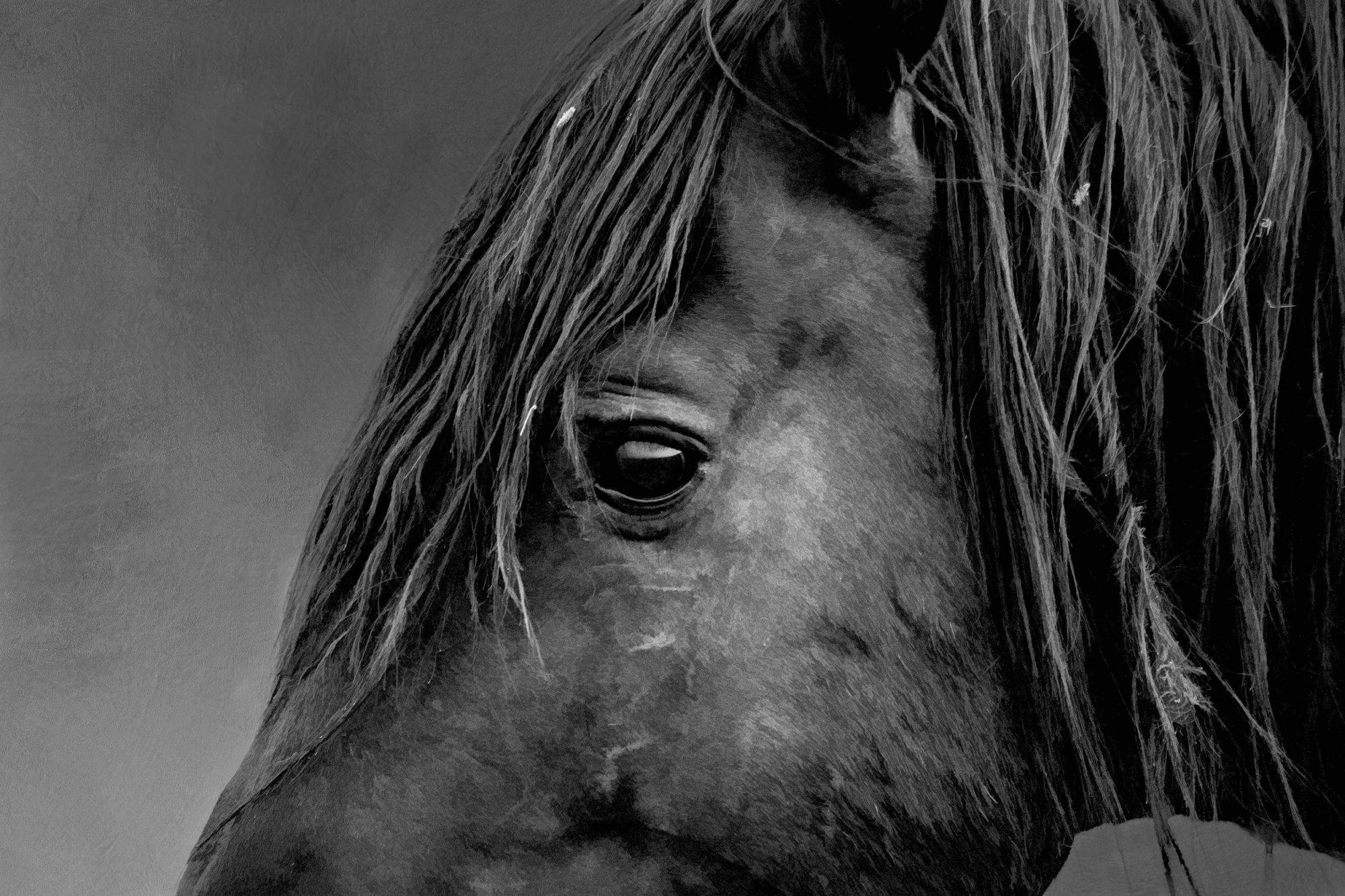 Black Stallion Up Close Panel by Nancy Fuller
