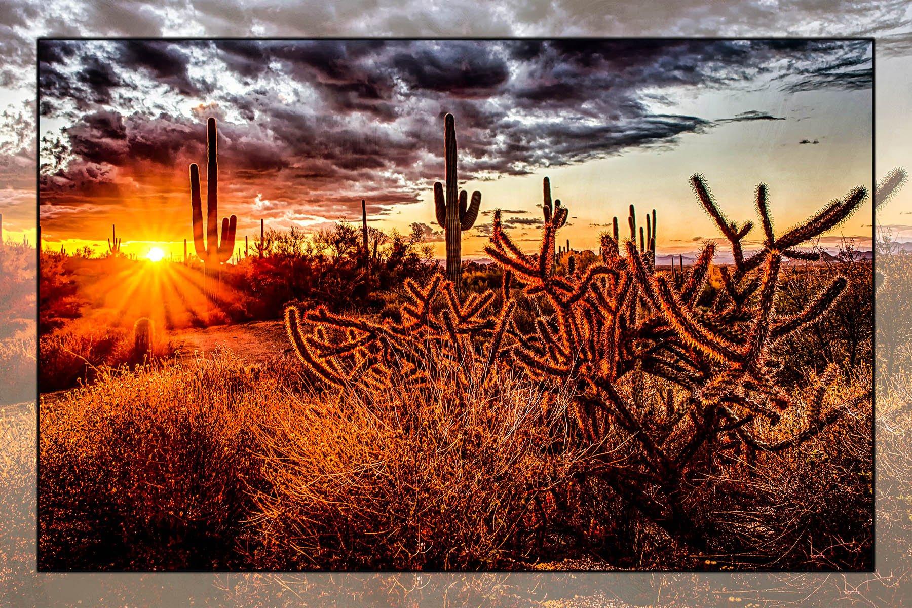 Cactus Sunset Panel by Nancy Fuller