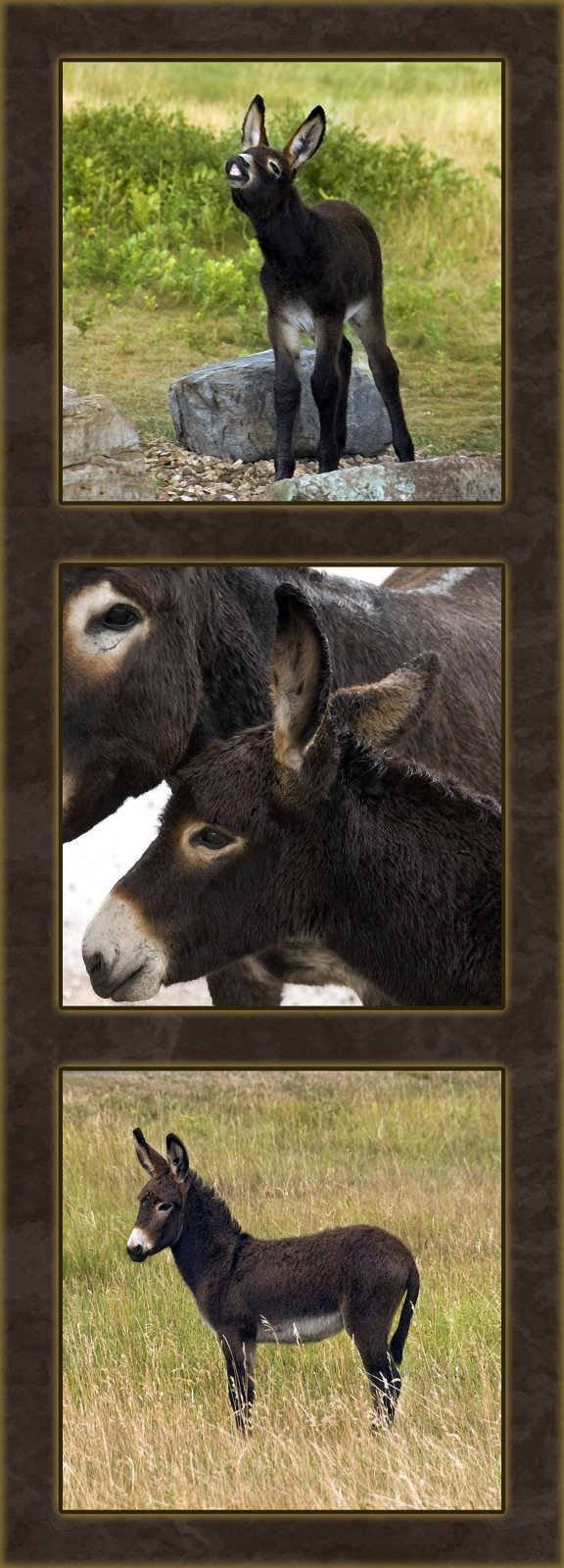 Donkeys - Three Vertical