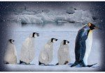 Call of the Wild - Penguin - Artic Blue Panel
