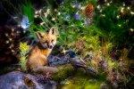 Imagine This Fox Digital Print Panel Forest