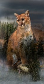 Call of the Wild Cougar Digital Print Panel Pine