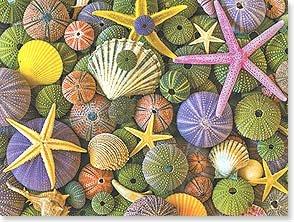 Blank Card - Seashells