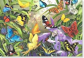 Blank Card - Tropical Butterflies
