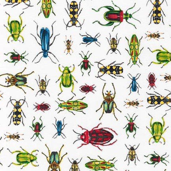 Everyday Favorites Beetles