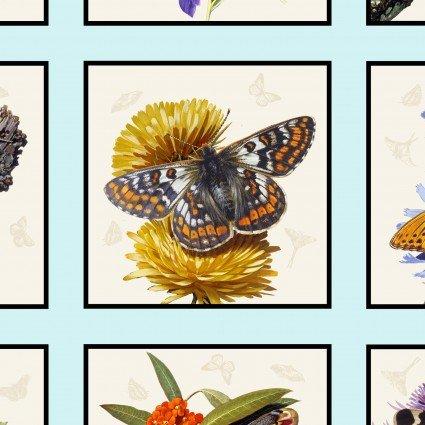 Butterflies & Moths - Framed