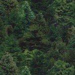 N. American Landscape Medley Green Trees