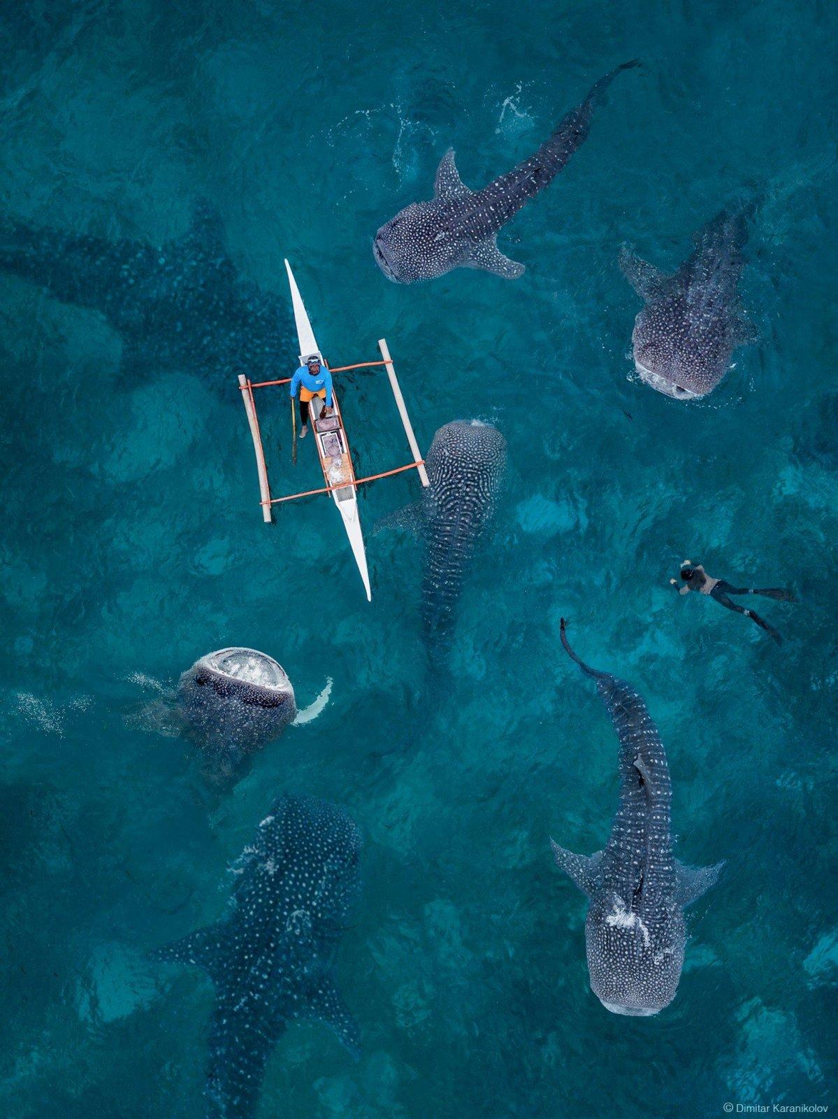 Philippines Dive Adventure