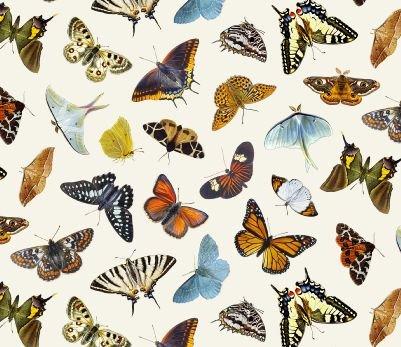 Butterflies & Moths Cream