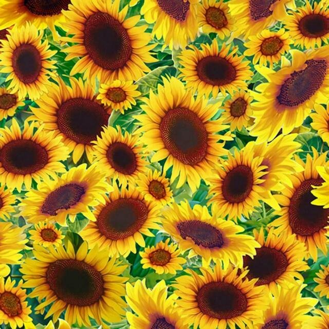 2021 BROWN BAG MYSTERY QUILT BORDERS - SUNFLOWERS
