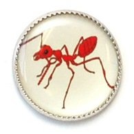 Insect Picture Buttons