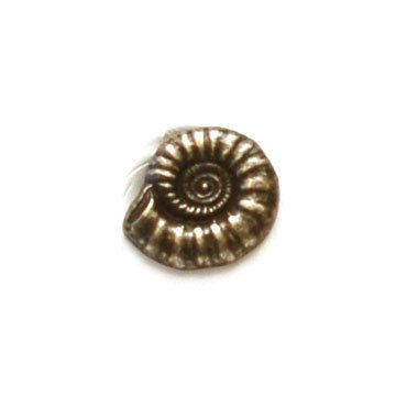 Nautilus Shell Metal Button