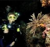 Signature Scuba Night Diver