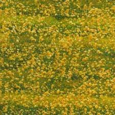 Danscapes Yellow Flowers