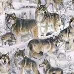 Wolves In Snow 2076 3C 1