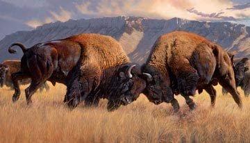 When Push comes to Shove Buffalo 24 panel *