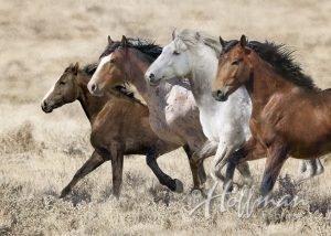 Wide Open Spaces - Running Horses 35 panel *