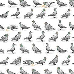 City Life Pigeons
