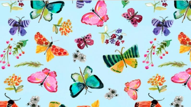 Dear Stella Spring Theory Butterflies Aqua Stella-DAW1092-Aqua