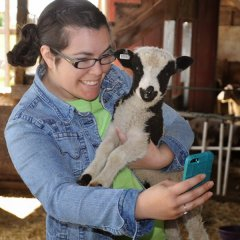 Meridian Jacobs-Jacob lamb selfie