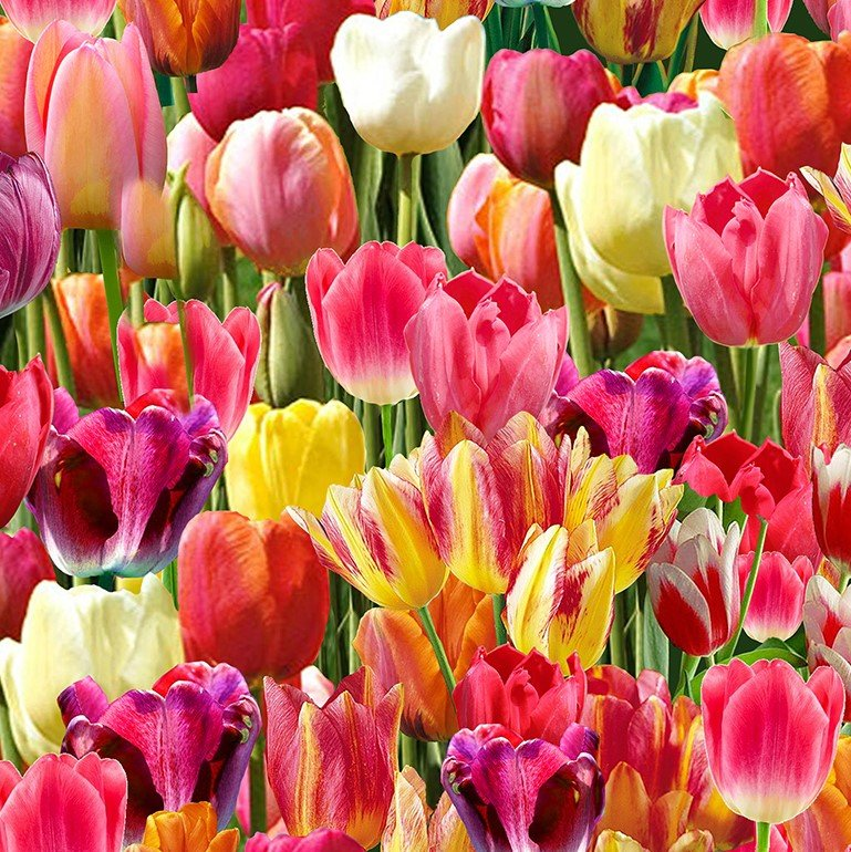 Nature...Packed Tulips