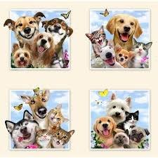 *10* 217 1319 cream Pet Selfies (PER ROW) RPP