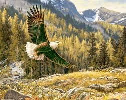*16* 916 P5570 Eagle Majestic Outdoors CPP