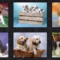 *10* 219 50965DP-X Somebody to Love Puppy Panel RPP