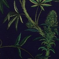 Cannabis Sativa Navy canvas H8325 D