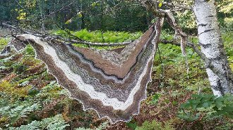Facets of Michigan Shawl Series - Winter Birch for October