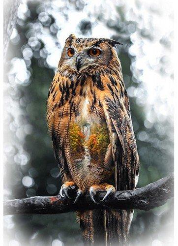 Call of the Wild - Owl - T4908-66-Autumn