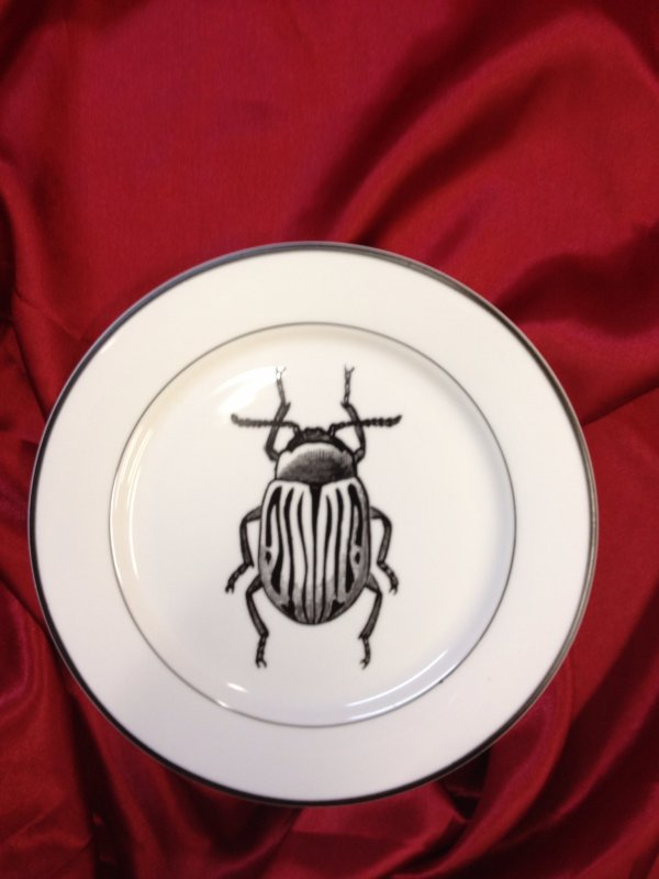 Vintage Style Beetle Insect Scientific Artwork Print 8 Ceramic Desert Plate