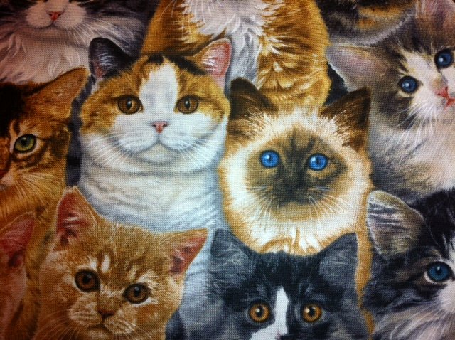 Cat Kitty Short Hair Persian Siamese Tabby Cat Breeds Cotton Quilting Fabric CR204