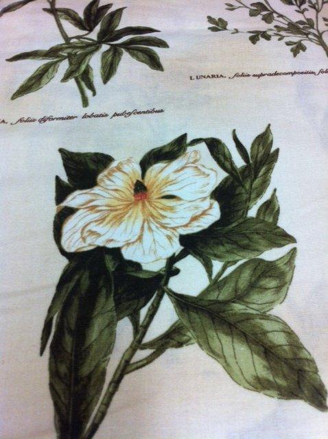 Botanical Illustration Floral Peony Tulip Magnolia Cream Background Cotton Quilting Fabric PC380