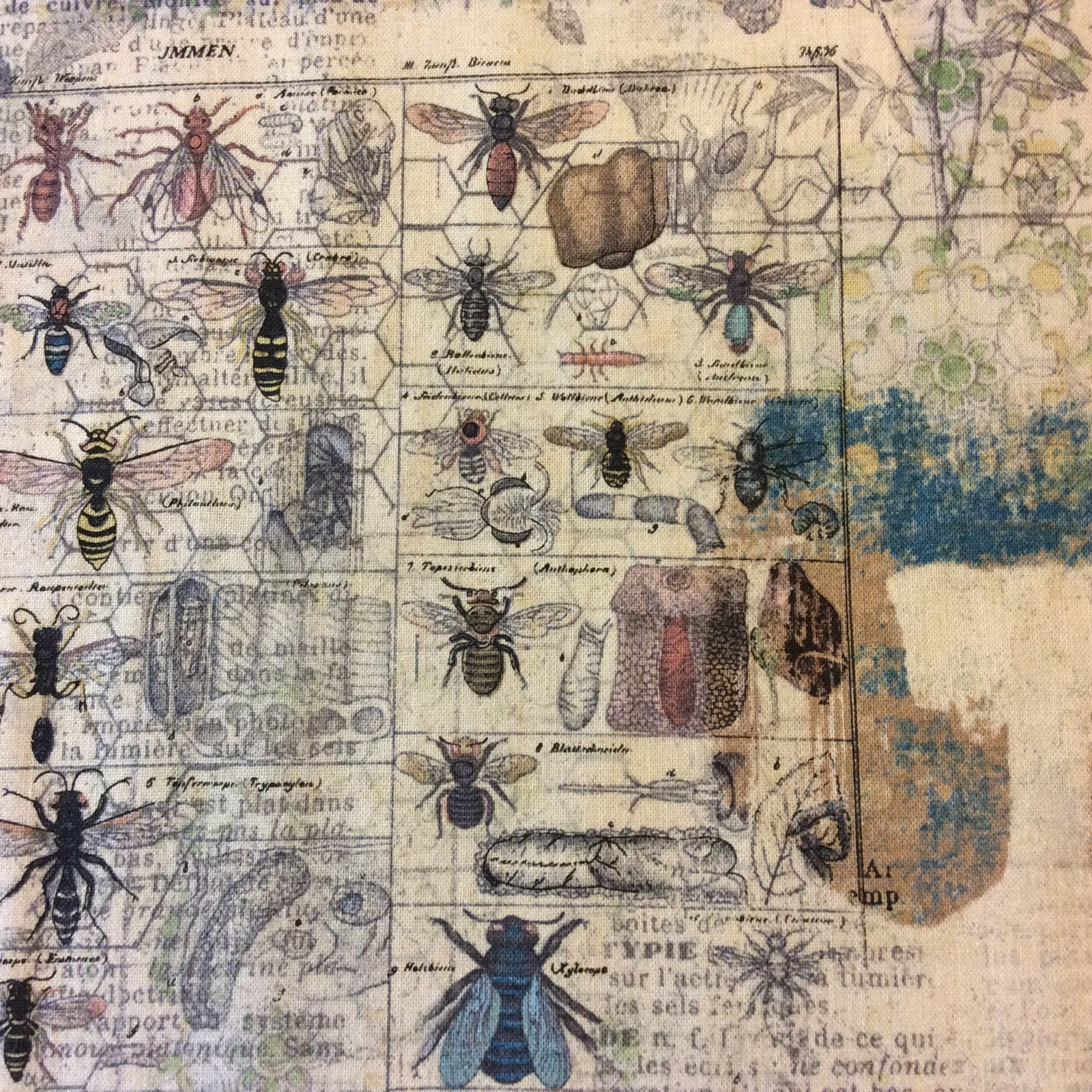 Science Entomology Insect Beetles French Journal Collecting Cotton Quilt Fabric WE143