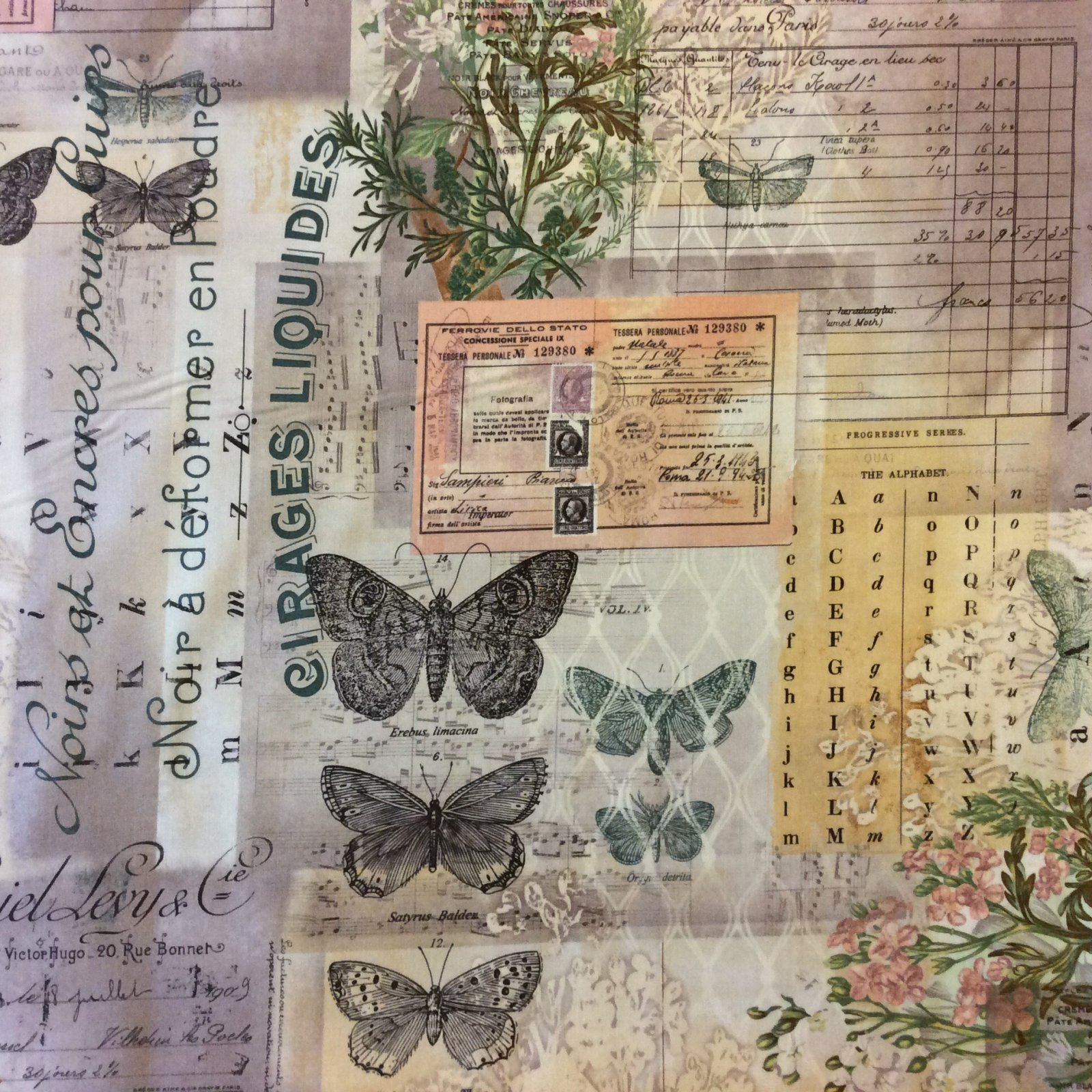 Science Entomology Butterfly Script French Journal Collecting  Cotton Quilt Fabric WE144