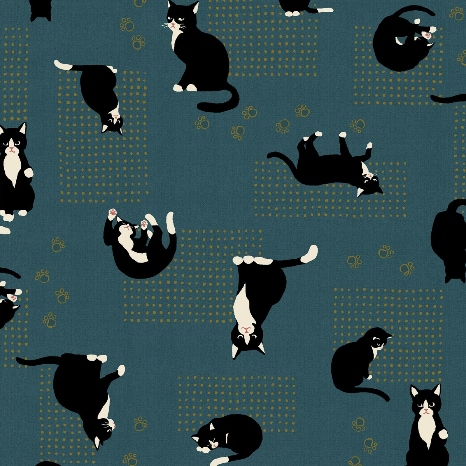 Asian Kitty Black