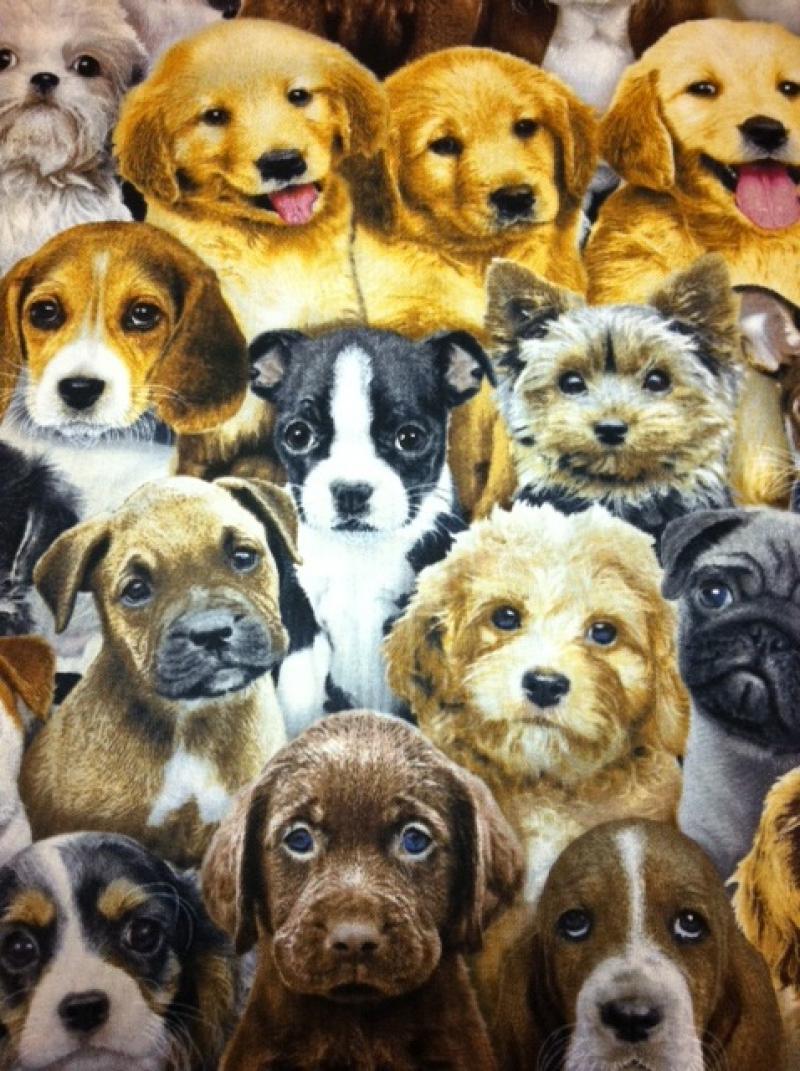Dog Puppy Photo Collage Beagle Pug Retriever And More